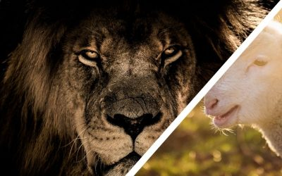 Lions & Lambs: Softly Shifting in Uncertainty